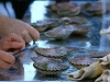 Scallop Shucking Competition